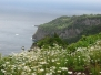 Flores, Azores